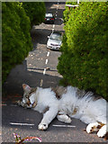 SX9265 : Big cat blocks road! by Chris Allen