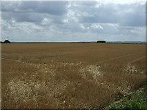 TL1435 : Stubble field off Stondon Road by JThomas
