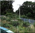SS5996 : Telegraph poles near Gowerton railway station by Jaggery