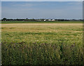 TL5070 : Barley field by Chittering Drove by Hugh Venables