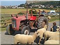 SH8081 : An old Massey Ferguson by Richard Hoare