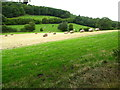 SJ0659 : Farmland and woodland in Denbighshire by Maggie Cox