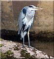 SK2523 : Heron next to Burton Bridge by Mat Fascione