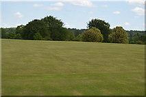 TQ5244 : Cricket pitch, Penshurst Park by N Chadwick