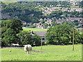 SE0622 : Sheep at Ashgrove Farm by Stephen Craven
