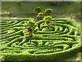 SW7727 : Looking down on the maze at Glendurgan Gardens by Rod Allday