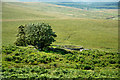 NY7682 : Sheepfold below Whitchester Crags by Trevor Littlewood