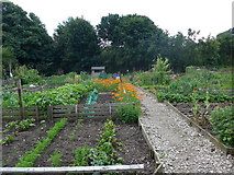 SK2566 : Allotments in Church Lane by Basher Eyre