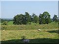 NY0484 : Old railway embankment near Trailflat Farm by Oliver Dixon