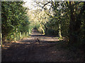 SP1098 : A track along the northern edge of Sutton Park by Robin Stott
