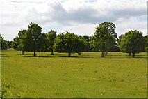TQ5244 : Penshurst Park by N Chadwick