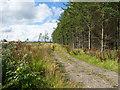NZ0221 : Track into or beside Howegill Plantation by Trevor Littlewood