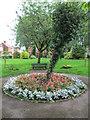 SJ9756 : Flowers in Westwood Recreation Ground, Leek by David Weston