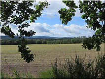 NH6454 : Field above Munlochy by James Wood