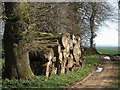 SP0615 : Logs by the bridleway to Yanworth by Derek Harper