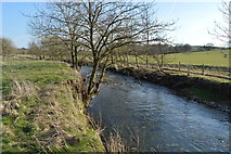 SD9058 : River Aire by N Chadwick