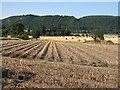 NO2021 : Potato field at Hawkstane by M J Richardson