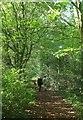 SX9899 : Sprydon Walk by Derek Harper