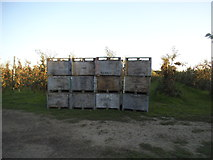 TQ6668 : Stack of boxes at Sole Street orchard by David Howard