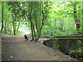 SE3338 : Path junction in Great Heads Wood by Stephen Craven