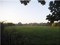 TQ5571 : Field by Old Mill Farm, Darenth by David Howard