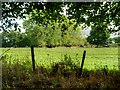 SJ4572 : Fence and Grazing Land near Trafford Hall by David Dixon