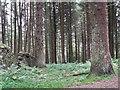 SK1689 : United Utilities Conifer Plantation by Stephen Burton