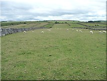 SK2076 : Parallel pastures, south of Tideswell Lane by Christine Johnstone