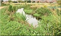 J3773 : The Knock River, Orangefield Park, Belfast (September 2015) by Albert Bridge