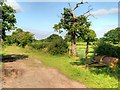 SJ4673 : Dunham-on-the-Hill, Rake Lane by David Dixon