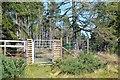 NN9255 : Entering Fonab Forest by Jim Barton