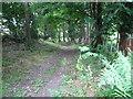 SJ1168 : Bridleway through a delightful dell near Aifft by Maggie Cox