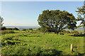 ST5149 : Deer Leap picnic spot by Richard Croft