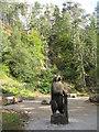 NC4901 : Bear in Ravens Rock Gorge by M J Richardson