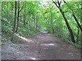 SP7701 : Ridgeway on Icknield Way, above Bledlow by David Hawgood