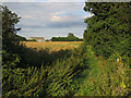 TL3974 : Bridleway to Willingham by Hugh Venables