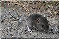 SS7923 : North Devon : mouse by Lewis Clarke