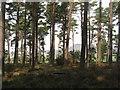 NH8097 : Balblair Wood by M J Richardson
