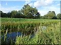 SE7304 : The River Torne near Chestnut Farm by Graham Hogg