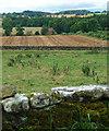 NZ0488 : Farmland near Rothley (3) by Stephen Richards