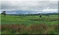 NZ0388 : Farmland near Rothley (4) by Stephen Richards