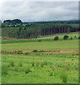 NZ0488 : Farmland near Rothley (5) by Stephen Richards