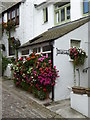 SW5140 : Flower display at 'Shenley' in Bunkers Hill St Ives by Rod Allday