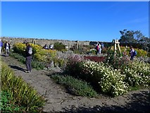 NU1341 : The small walled-garden at Lindisfarne Castle by Gordon Brown