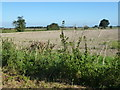 TL5574 : Farmland near Padney Farm south of Barway by Richard Humphrey
