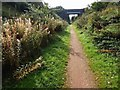 SK6458 : Bridge ahead on the Southwell Trail by Steve  Fareham