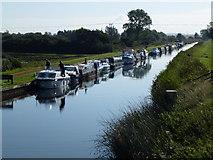 TL5369 : Boats moored on Reach Lode at Upware by Richard Humphrey