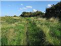 TF9343 : Norfolk Coast Path, Warham Greens by Hugh Venables