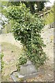 SP5905 : Cross of Ivy by Bill Nicholls