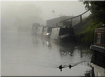 SJ8512 : Foggy morning on the Shropshire Union Canal by Roger  Kidd